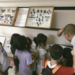 Botany Museum