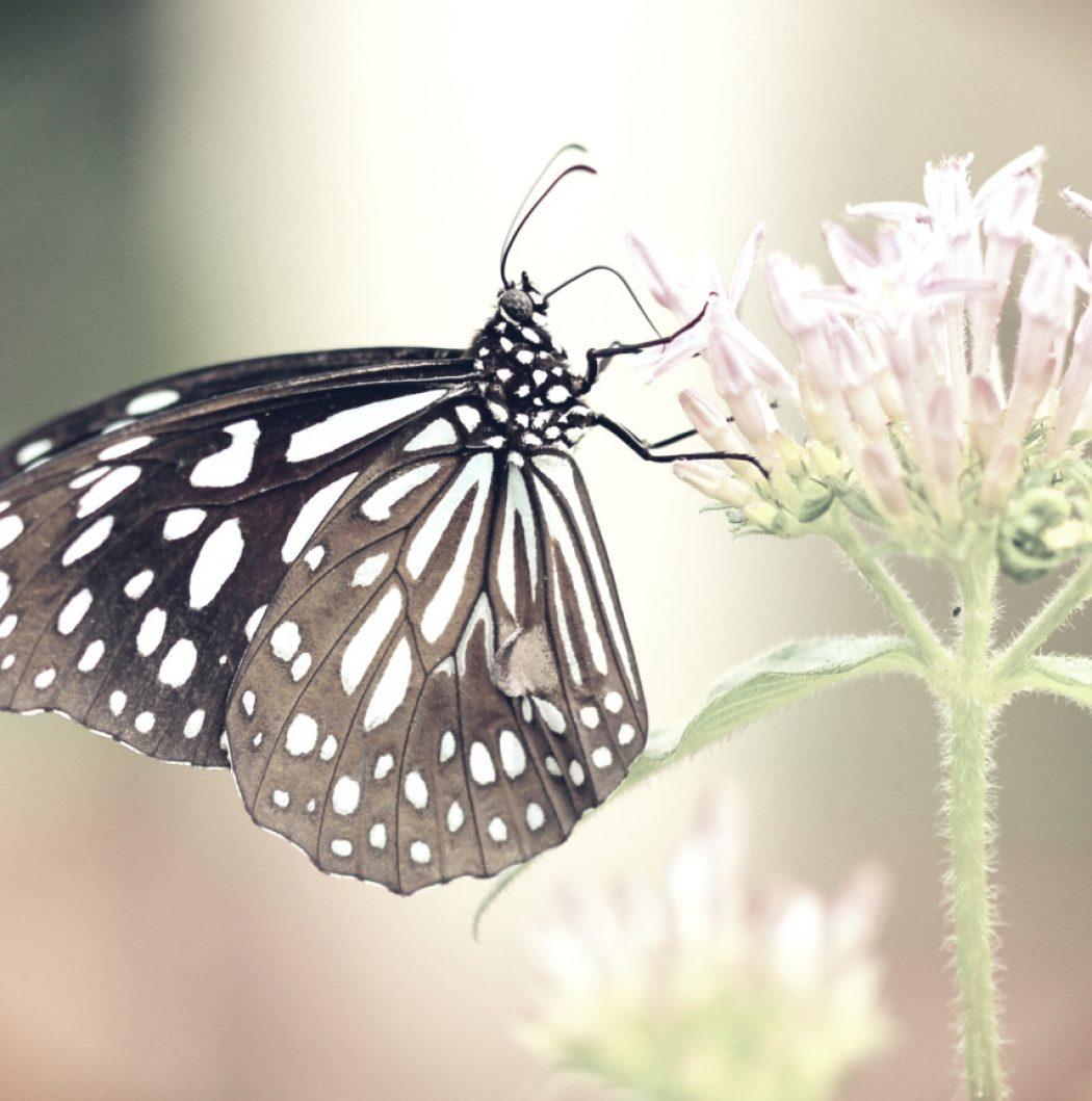 butterflyweb1